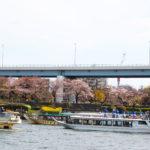 屋形船 なわ安 桜・花見屋形船